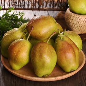 香梨10斤红香酥新鲜梨子水果源自新疆库尔勒梨