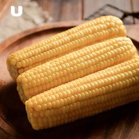 水果玉米 富含膳食纤维 甜糯可口  220g*8根真空包装 包邮