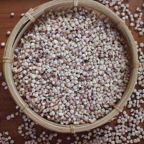 2019年新高粱米 自然农耕 纯素种植