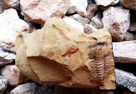 【4月14日】小小考古学家,一起去山里挖化石吧!