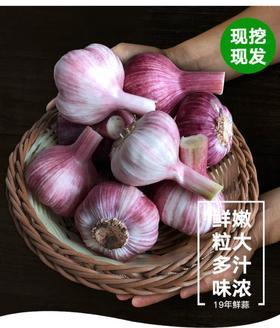 2020年鲜蒜湿蒜5斤 山东金乡新鲜大蒜头紫皮蒜头可腌糖醋蒜大蒜头