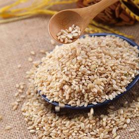 碱地生态糙米:泡在水里会发芽的糙米!