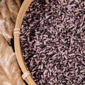 【米中贵族·营养贡米】墨江紫米高蛋白低脂肪 营养丰富2斤装
