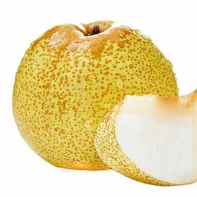 正宗砀山酥梨5斤包邮新鲜水果梨子非皇冠梨雪梨丰水梨