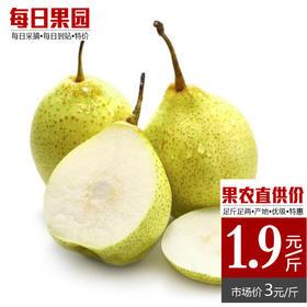 特级河北鸭梨 精选3斤装 水果多汁 新鲜水果 特产农家-835055