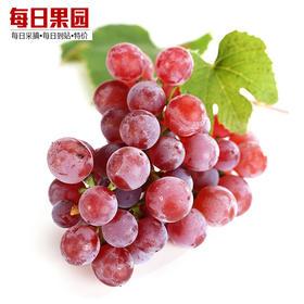 新疆红提 精选3斤装 新鲜当季水果新疆提子葡萄-864822
