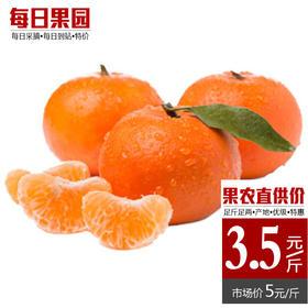 从化玫瑰柑 精选3斤装 玫瑰香柑新鲜水果皇帝柑贡大果柑清甜柑橘--864825