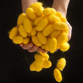 邵氏家纺黄金丝光胎 定制 100%桑蚕丝裸丝 所有指标均严格达标  可直接入驻商超销售