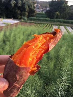 福建六鳌沙地红蜜薯10斤红心甜地瓜新鲜蕃薯