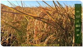 2021东北大米委托种植认养 黑土寒地香稻七不水稻大米CSA委托种植土地认购 黑龙江硒都海伦委托种植水稻土地配送份额1分-1亩 寒地世界品种苗稻2号