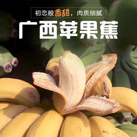 【顺丰】广西苹果蕉香蕉当季新鲜水果苹果粉香蕉现摘5斤装包邮
