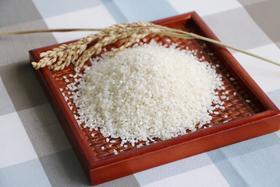 阳山生态米  晶莹剔透 米中佳品