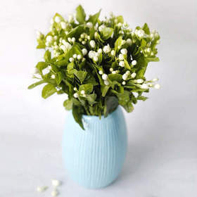 【427精选日】香气怡人 净化空气 云南直发严选品质茉莉花鲜花鲜切花