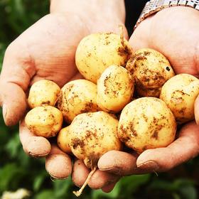 买5斤送半斤 湖北  •  恩施富硒小土豆  深山种植 粉嫩香甜  细腻糯糯口感 原始农耕