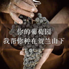 源石酒庄·葡萄认养计划