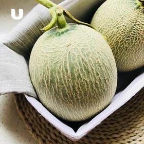 海阳网纹瓜 果肉饱满鲜嫩 清甜多汁 现摘现发~ 2个装 4-4.5斤