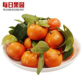 优级沙糖桔 5.9元/斤 精选3斤装 正宗新鲜水果小橘子砂糖橘-835070