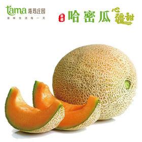 【塔玛庄园】 心疆甜哈蜜瓜2个/箱 炎炎夏日解渴非常