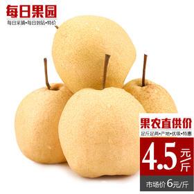 安徽砀山酥梨 精选5斤装 水晶鸭梨皇冠梨香梨子雪花贡梨-835054