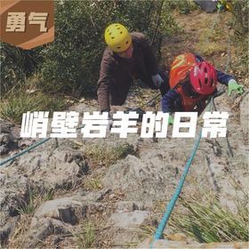 『攀岩』峭壁岩羊的日常