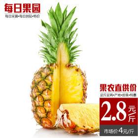 云南香水菠萝凤梨 精选单颗4斤 甜脆多汁手撕凤梨新鲜水果云南特产-835083