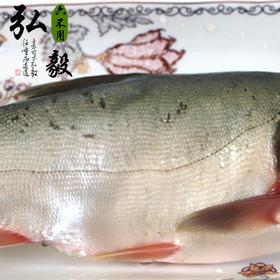 【弘毅六不用生态农场】丹江口水库 野生鲢鱼块 2斤/份