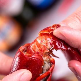 当季上新 | 清水小龙虾熟食小龙虾 十三香,麻辣口味任选,顺丰包邮