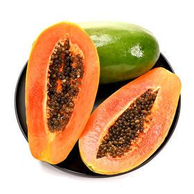 海南红心木瓜