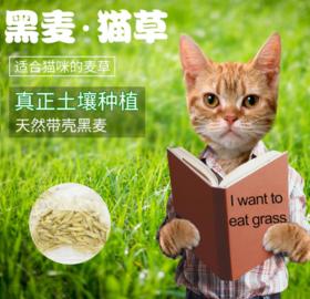 喜归 | 草娃娃猫草盆,送猫草种子、营养土