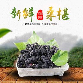 【新鲜水果】郧阳区新鲜露天桑葚丨 2斤装丨十堰主城区包邮
