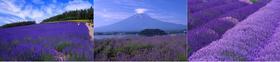 【恒大】日本东京富士山五天