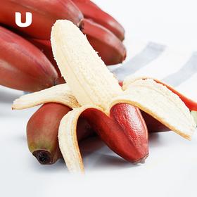 漳州软妹 红美人香蕉!拨开表皮 果肉饱满,口感软糯香甜,欲罢不能~