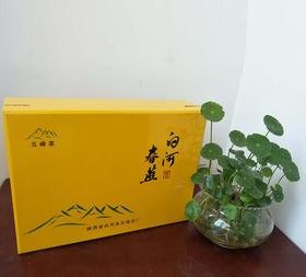2019年新茶陕西特产白河春燕特级绿茶五峰生态茶叶精品礼盒