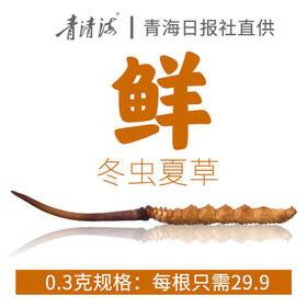 【青海日报直供】2019新鲜冬虫夏草 0.3克/根