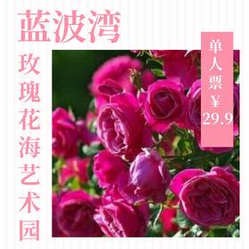 【度假】(成人票)蓝波湾玫瑰花海艺术园门票(不含温泉)