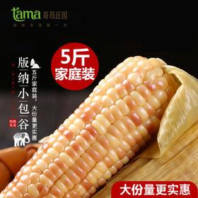西双版纳小玉米 云南版纳香糯小玉米包谷新鲜真空包装一箱