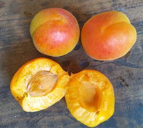 酵素种植的杏 果香浓郁酸甜可口,润肠减肥 美容水果