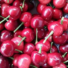酵素种植的樱桃 4斤顺丰包邮 皮薄肉软,味道浓郁,孕妇宝宝放心吃