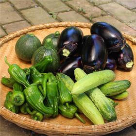 蔬菜组合(随机搭配) 5斤装 自然农耕 无农药无化肥 人工除草 每日现摘现发 顺丰直达
