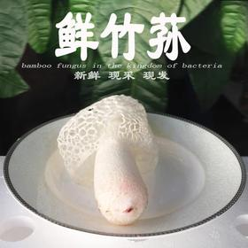 [雪尔商行]新鲜竹荪菌