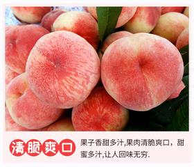 瑶池仙果 新鲜水密桃 5斤