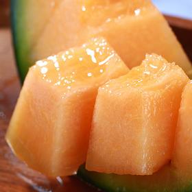 河南 • 西州蜜25号 甘甜如蜜,醇香爽口    夏季解暑解渴水果  哈密瓜中的劳斯莱斯