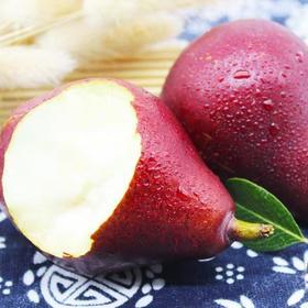 陕西10斤红啤梨带箱整箱红皮梨子现摘现发新鲜应季孕妇水果香梨