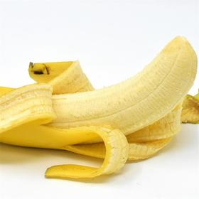 云南热带威尼斯香蕉 现摘现发  香甜软糯无催熟