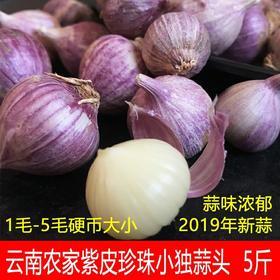 紫皮珍珠小独蒜5斤干蒜农家独头蒜新鲜紫皮香蒜紫皮独蒜头小香蒜