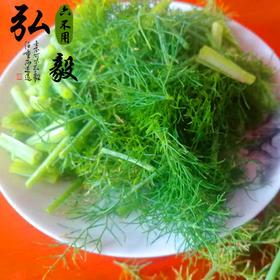 【弘毅六不用农场】顺季茴香,露天栽培,2斤/份,山东省内包邮