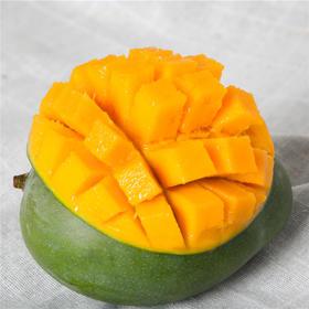 帮卖精选 | 芒果中的Plus 攀枝花凯特芒  个大皮薄,香浓多汁 5斤 (放熟后吃)