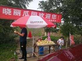 晓丽瓜园10斤包送每斤10元