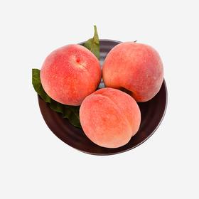衡水水蜜桃 可以吸的蜜桃
