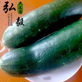 【弘毅六不用生态农场】西域黄瓜 胡瓜 可留种 2斤/份 山东包邮
